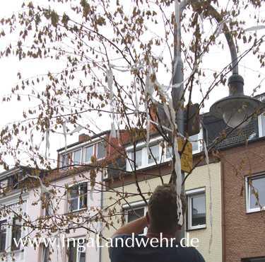 Ein junger Mann nimmt den Maibaum herunter