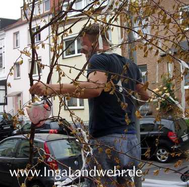 Der Maibaum wird von einem Mann weggetragen