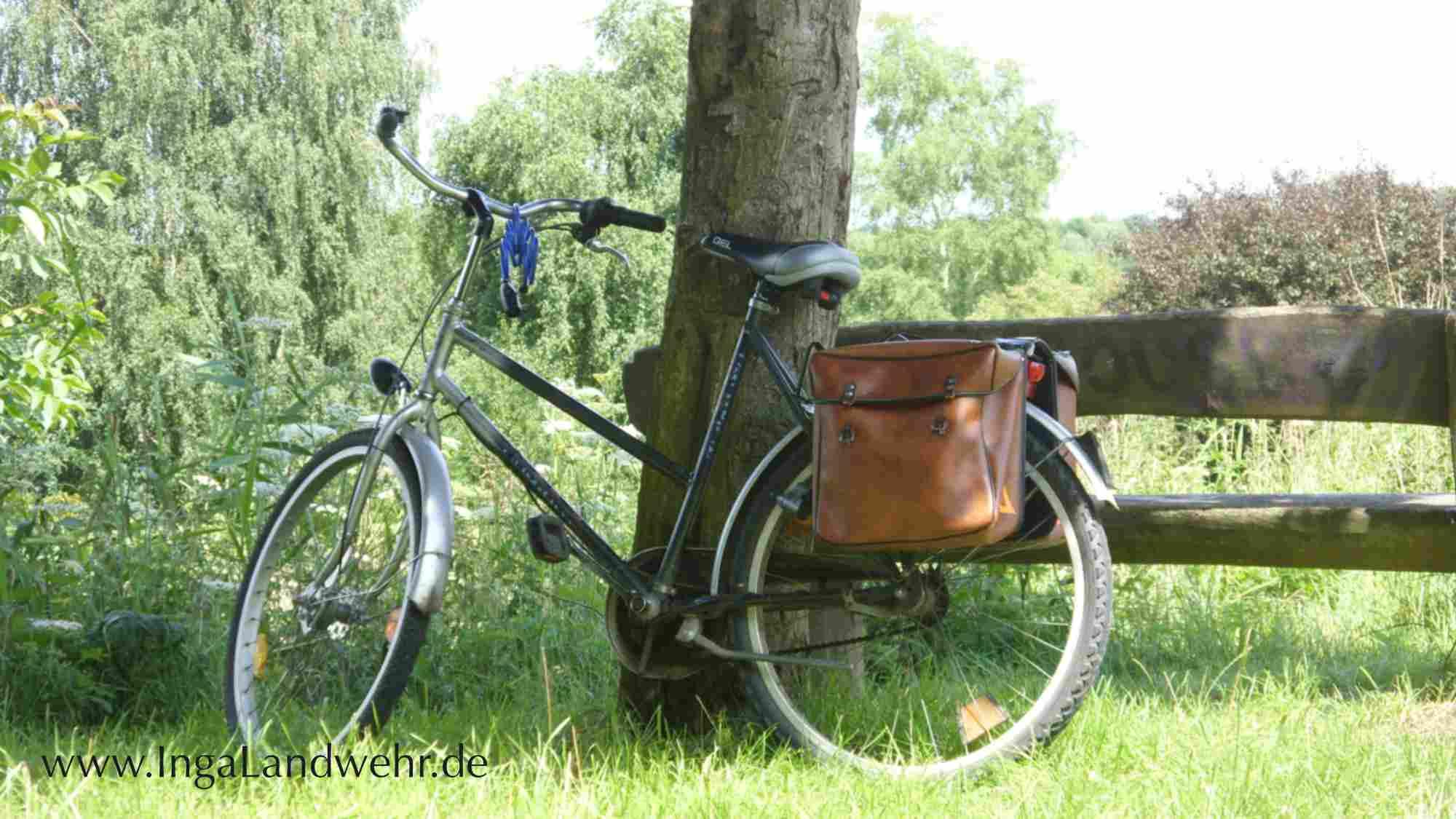 Fahrrad mit zwei Packtaschen lehnt an einem Baum