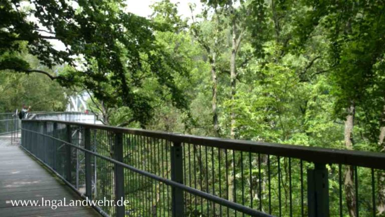 Zwischen Baumkronen in 26 Metern Höhe auf dem Baumwipfelpfad in Bad Harzburg